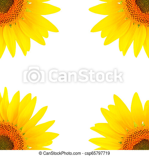 Blank white page decorated with sunflowers - csp65797719