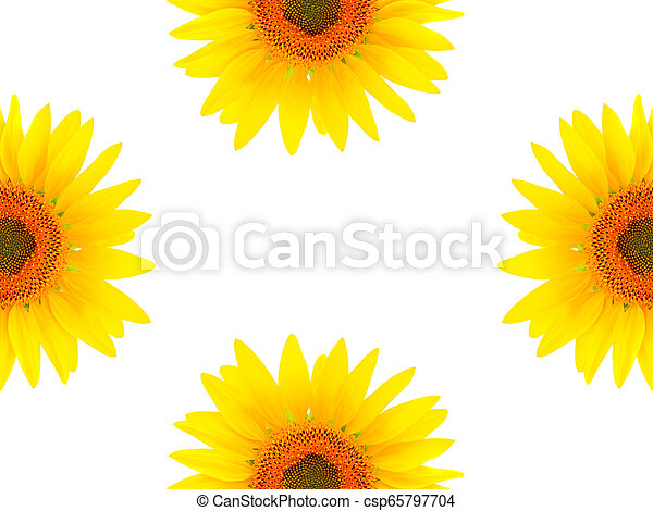 Blank white page decorated with sunflowers - csp65797704