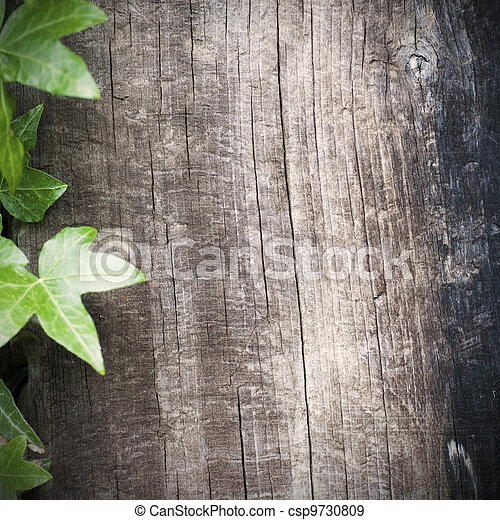 blank wooden background with ivy frame at the left side, grungy style, room for text, square image - csp9730809