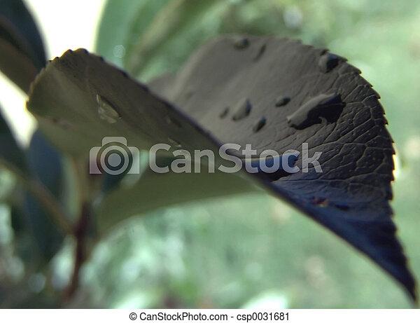 Lederverschluss - csp0031681