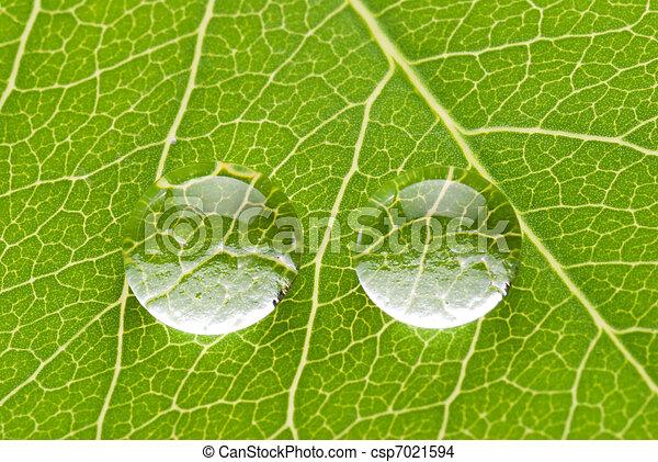 blatt, durchsichtig, zwei, grün, tropfen - csp7021594