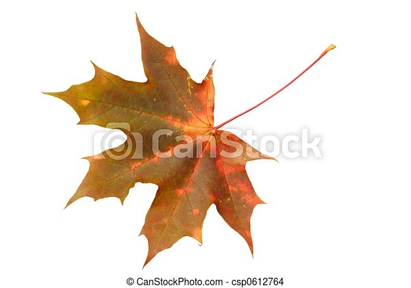 Leaf - csp0612764