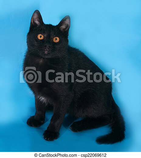 katze schwarz blaue augen