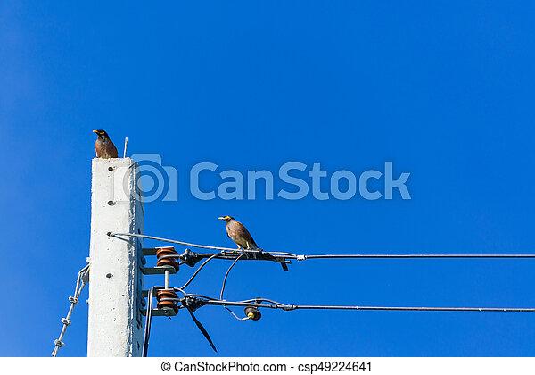 Blaues, drähte, elektrisch, kabel, sky., gesetzt, vogel. Blaues ...