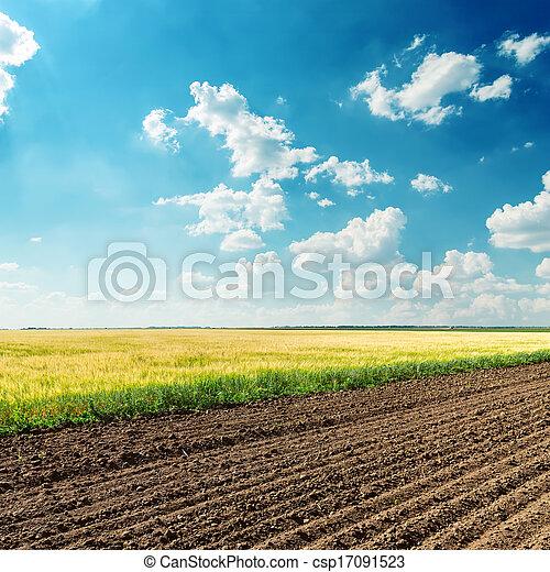 blaues, felder, himmelsgewölbe, tief, bewölkt , unter, landwirtschaft - csp17091523