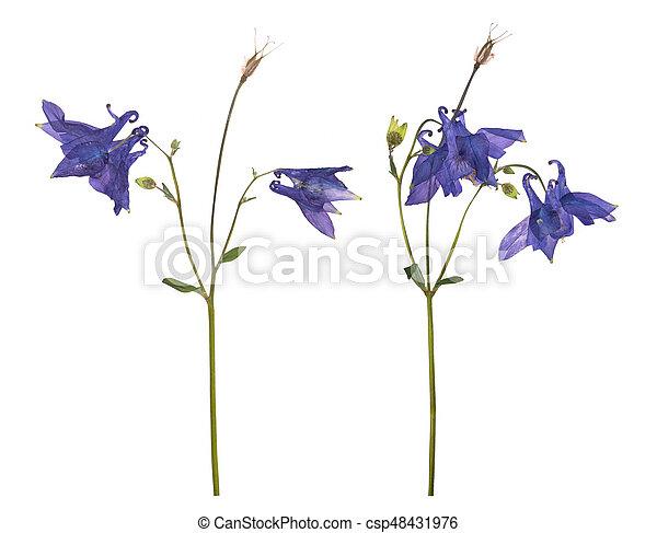 Blaues, freigestellt, glockenblume, hintergrund.,... Bild - Suche ...