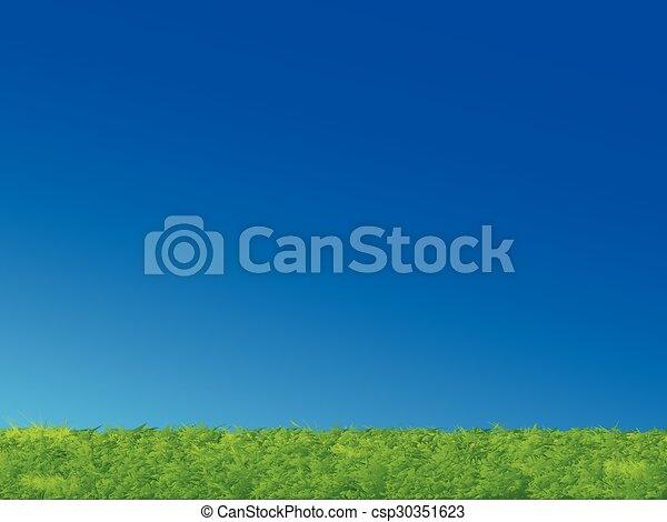 Grünes Gras, blauer Himmel - csp30351623