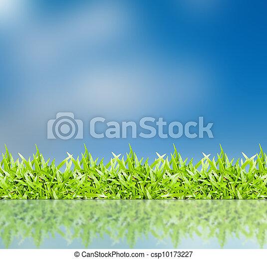 blaues, gras, himmelsgewölbe - csp10173227