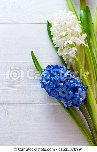 Blaues, hyazinthen, rosa, hintergrund., gemalt, licht,... Stockfotos ...