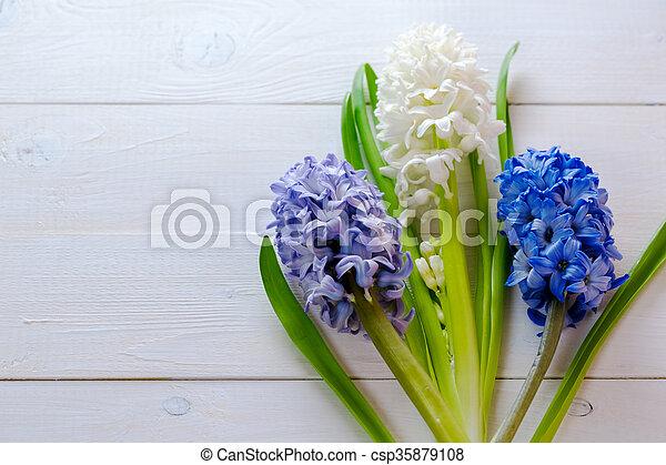 Blaues, hyazinthen, rosa, hintergrund., gemalt, licht ...