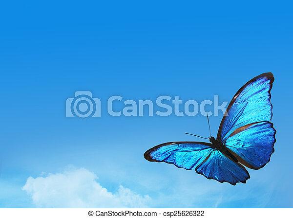 Blauer Himmel mit hellem Schmetterling - csp25626322