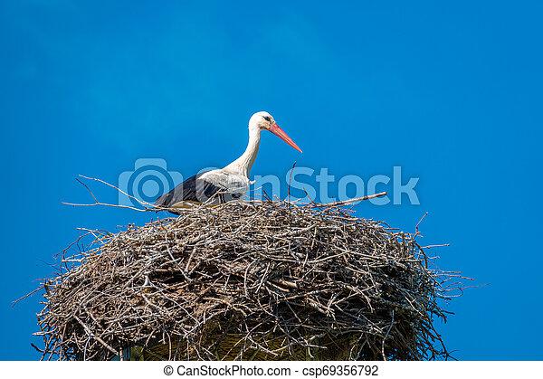 blaues, steht, nest, himmelsgewölbe, storch, wetter, nett - csp69356792