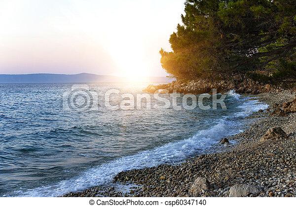 blaues, ufer, sea., kiefer, croatia. - csp60347140