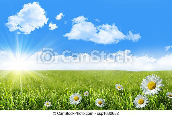 blaues, wildes gras, himmelsgewölbe, gänseblümchen - csp1630652