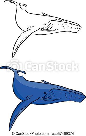 Ziemlich Blauwal Färbung Seite Galerie - Beispiel Wiederaufnahme ...