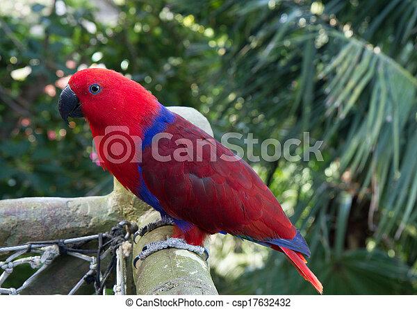 Beste Blauwe , baars, kleurrijke, rood, papegaai. Blauwe , baars LU-06