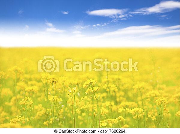 blauwe bloem, hemel, geel veld, achtergrond - csp17620264