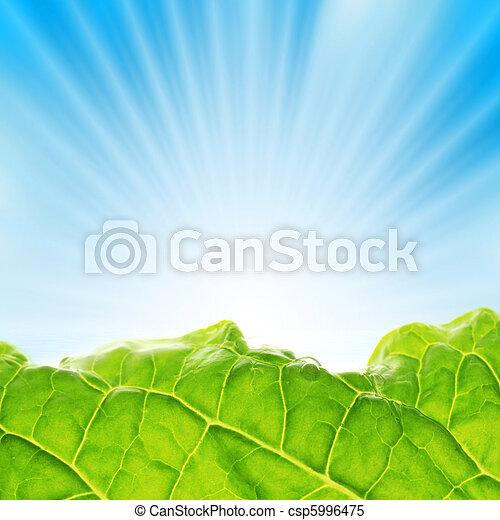 blauwe , groen, stralen, sky., zon, op, opstand, fris - csp5996475
