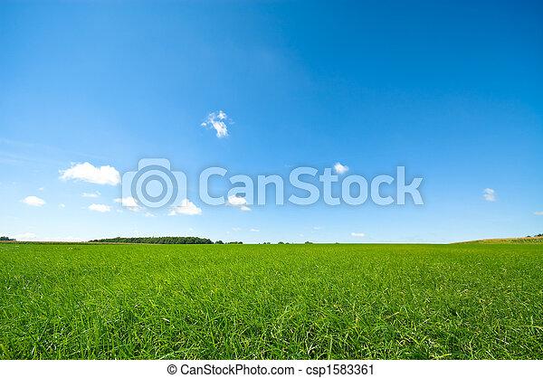blauwe hemel, helder, groene, fris, gras - csp1583361