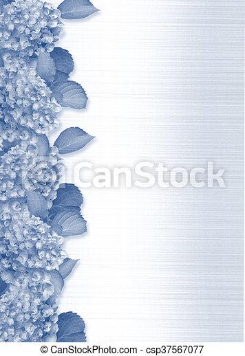 blauwe , hortensia, grens - csp37567077