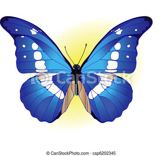 blauwe , vlinder - csp6202345