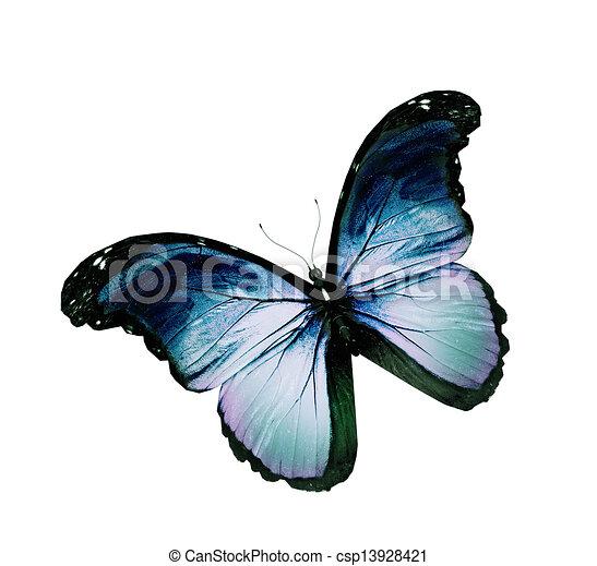 blauwe , vlinder, grunge, vliegen, vrijstaand, witte  - csp13928421