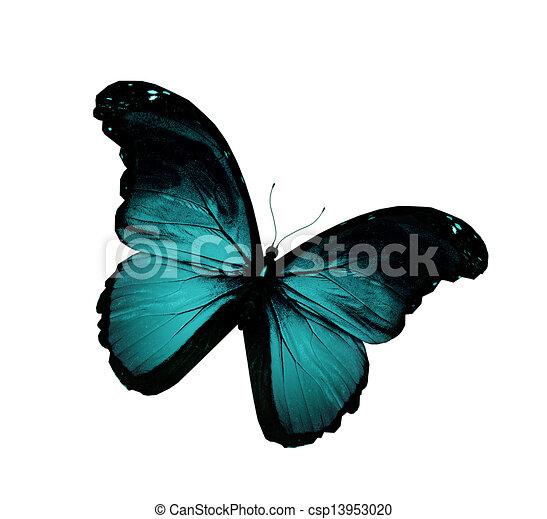 blauwe , vlinder, grunge, vliegen, vrijstaand, witte  - csp13953020