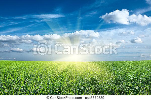 blauwe , zon, hemel, groen veld, ondergaande zon , onder, fris, gras - csp3579839