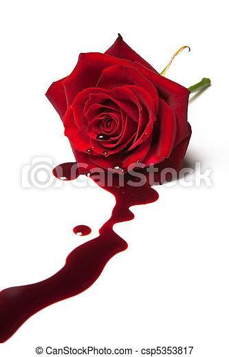 Bleeding rose - csp5353817