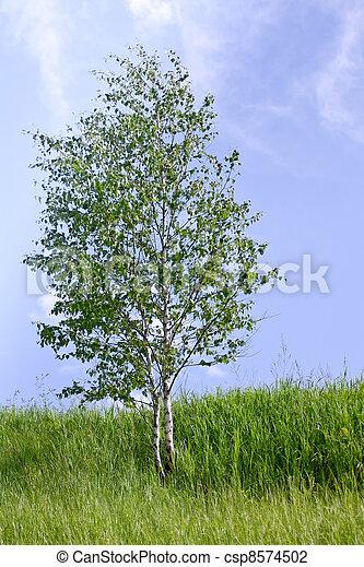 bleu arbre ciel jeune contre bouleau photo libre de droits - Arbre Ciel