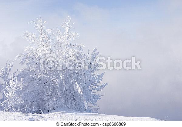 bleu, congère, surgelé, ciel, arbres, solitaire, brouillard, fond, neigé, costing - csp8606869