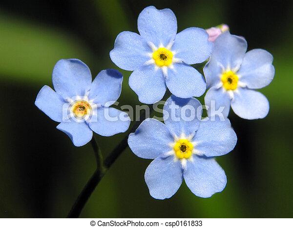 bleu fleurit - csp0161833