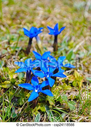 Bleu Fleurs Sauvages Montagne Montagne Bleue Herbe Fond Fleurs