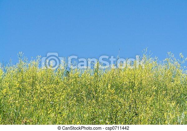 bleu, grass., sky. - csp0711442