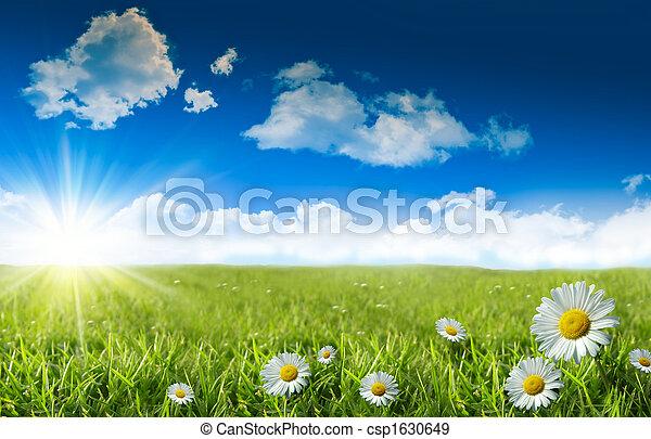 bleu, herbe sauvage, ciel, pâquerettes - csp1630649