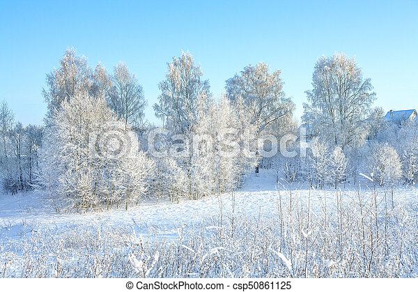 Bleu Hiver Neigeux Ciel Paysage Rural Foret
