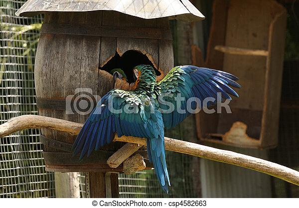 bleu, macaw, ailes, or, dehors - csp4582663