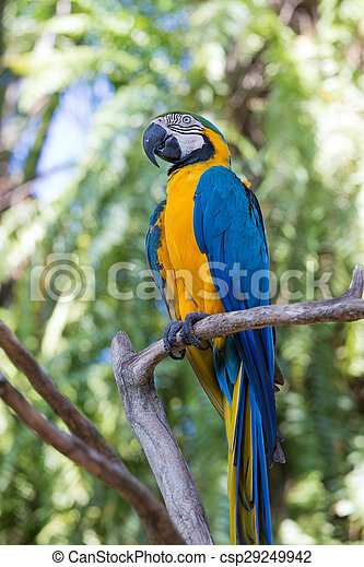 Bleu Macaw Bali Perroquet Indonesie Jaune Parc Oiseau Bleu Ararauna Macaw Or Perroquet Aussi Bali Indonesie