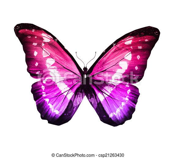 Bleu papillon turquoise isol blanc morpho couleur - Papillon dessin couleur ...