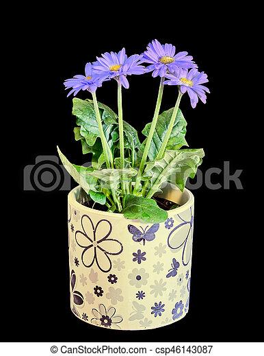 Bleu Pot Fleurs Isolated Feuilles Fleurs Vert Gerbera Bleu