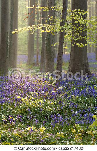 bleu, printemps, hêtre, fleurs, forêt - csp32217482