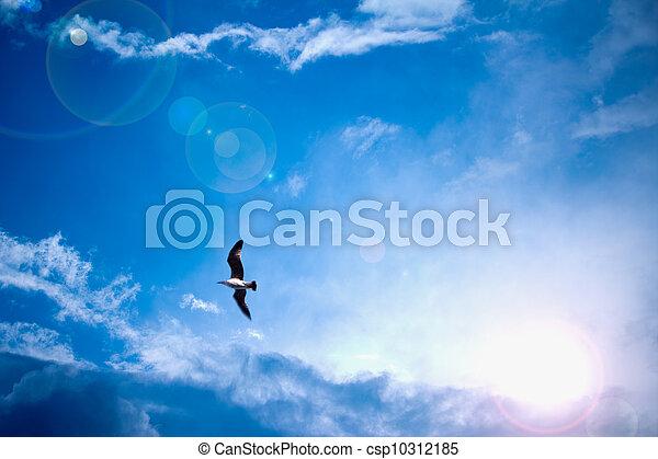 bleu, rayons, soleil, ciel, clair, céleste, oiseau - csp10312185