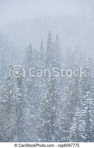 Blizzard in the forest 02 - csp6097775