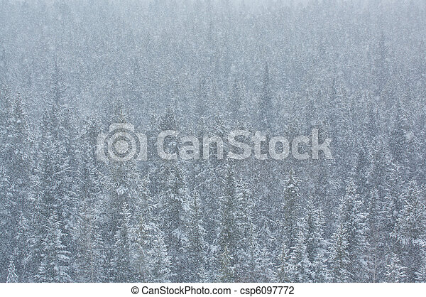 Blizzard in the forest  - csp6097772