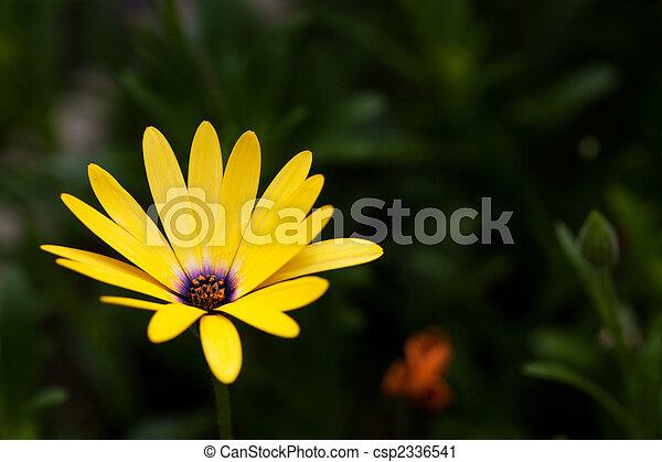 bloem, gele - csp2336541