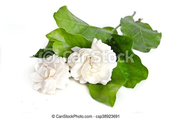 Super Bloem, jasmijn, vrijstaand, achtergrond, witte bloemen. Spreaded #GN93