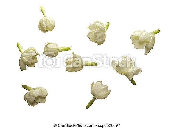 bloem, jasmijn, vrijstaand, verzameling - csp6528097
