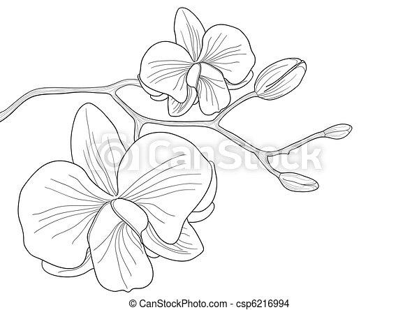 bloem, orchidee - csp6216994