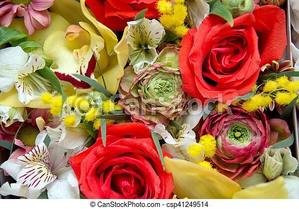 bloemen, achtergrond - csp41249514
