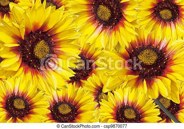 bloemen, achtergrond - csp9870077